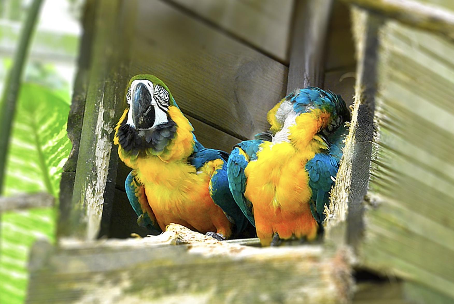 Louer un logement Guadeloupe
